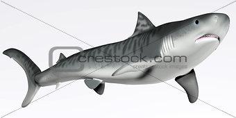 Tiger Shark on White