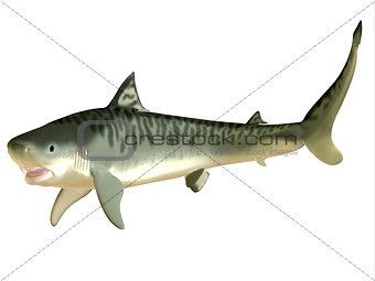 Tiger Shark Side Profile