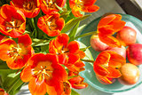 Red tulips and apples in sunlight