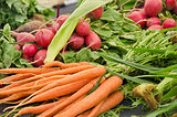 carrots and radishes
