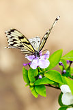 Butterfly Feeding on Flower