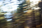 Motion blur of forest