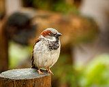 Little bird on wood