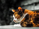 Colorful cat with black and white background