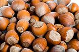 Fresh cropped hazelnuts as food background