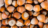 Fresh cropped hazelnuts as food background