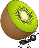 Ant Carrying Kiwi