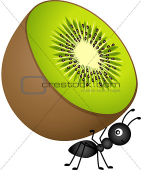 Ant Carrying Kiwi