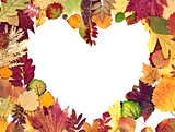 form the heart of autumn leaves