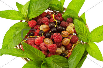 Agrus mint raspberry currant