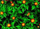 Flowerses Altaya