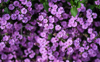 Close up top view image of purple wild flower landscape