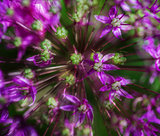 beautiful purple floral abstract