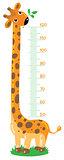 giraffe stadiometer (meter wall)