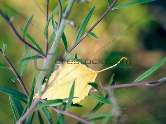 foliage in plant