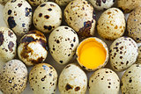 Quail eggs and egg with two yolks.