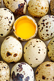 Colorful quail eggs.