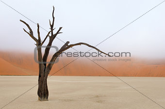 Tree skeleton, Deadvlei, Namibia