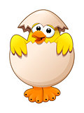 Funny chick in the egg.