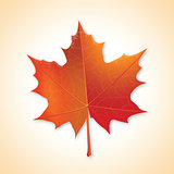 Autumn maple leaf on colorful background.