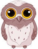 Cute owlet