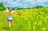 Walking on sunflower field