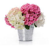 bunch of hydrangea