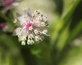 Spring flower feeling