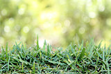 Green Lawn turf abstract background