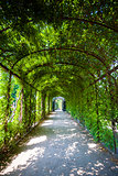 Walkway under a green natural tunnel