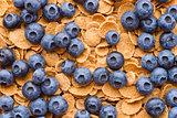 Multigrain muesli with berries