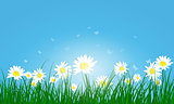 Meadow color background