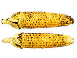 roasted corncob isolated