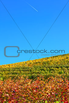 Autumnal vineyards under blue sky in Italy.
