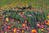 Stump with moss and autumnal leaves on the ground.