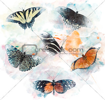 Watercolor Image Of  Butterflies