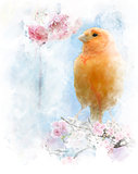 Watercolor Image Of  Yellow Bird
