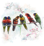Watercolor Image Of  Colorful Parrots