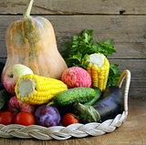 fall farm harvest - pumpkins, corn, apples, cucumbers, tomatoes