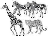 Leopard, Zebra, Giraffe