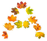 Letter A composed of autumn maple leafs