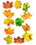 Letter B composed of autumn maple leafs