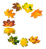 Letter C composed of autumn maple leafs