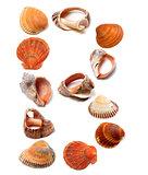 Letter B composed of seashells