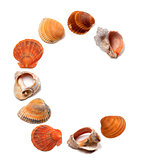Letter C composed of seashells