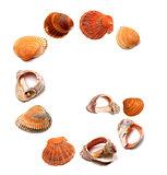 Letter G composed of seashells