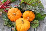 Miniature pumpkins and swiss chard
