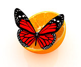 Red butterflys on a half oranges