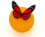 Red butterflys on a oranges