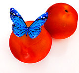 Blue butterflys on a fresh peaches